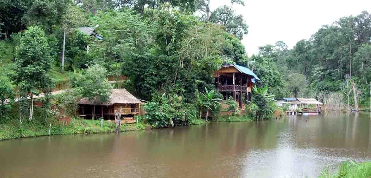 Mushroom Rainforest Resort